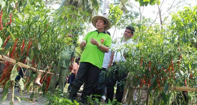 Bupati Minahasa Utara Drs Sompie SF Singal MBA Tanam Panen Cabe 3