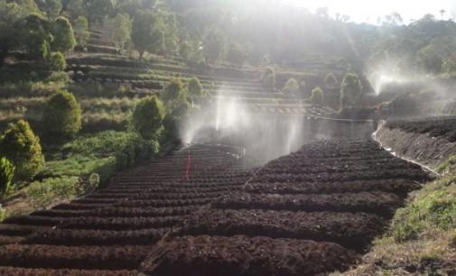 Pemprov Berhasil Mendorong Petani Tingkatkan Produktivitas Tanaman Holtikultura