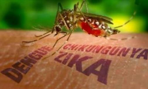 Bitung Diminta Waspadai Virus Zika