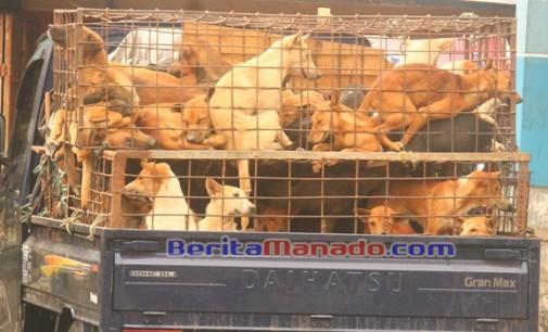 Aksi Doger Kembali Marak di Langowan