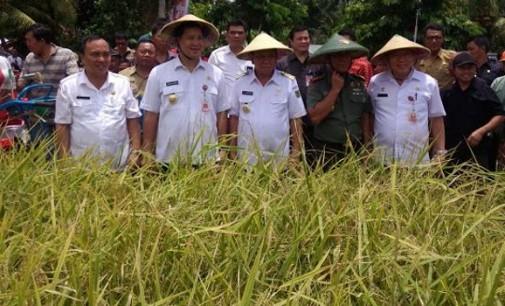 STEVEN KANDOUW: Bantuan Pertanian Jangan Menjadi Komoditas Politik