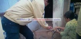 Kasus Gigitan Anjing, Begini Tanggapan Kapus Tatapaan