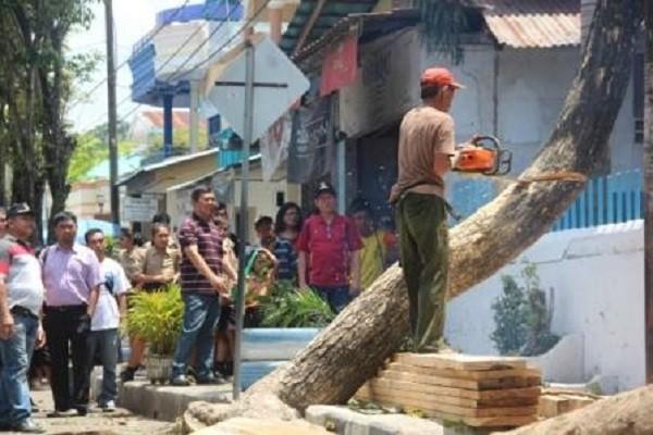 Salah satu proses penebangan pohon yang dilakukan Pemerintah Kota demi keselamatan warga masyarakat.