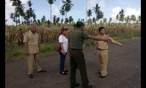 Mantapkan Panen Jagung, Dinas Pertanian dan TNI Tinjau Lokasi