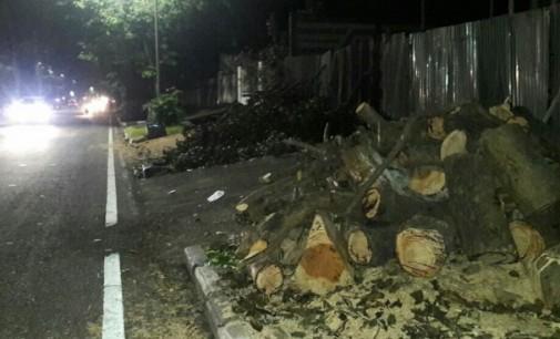 DLH dan Camat Bakal Usut Aksi Tebang Pohon Perindang di Madidir