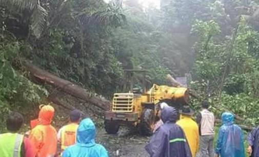 Pemerintah harus Menebang Pohon Rawan Tumbang