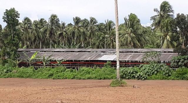 Salah satu peternakan ayam di Desa Wineru yang dekat pemukiman masyarakat.