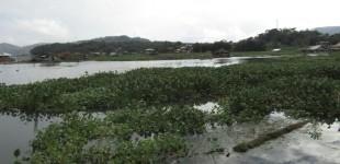 Danau Tondano Terancam Punah Gara-gara Enceng Gondok