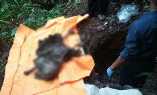 Arie Rundengan Ditemukan Pemburu Tikus Hutan