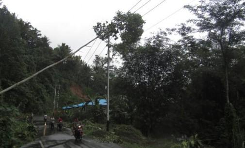 Pohon Tumbang Bisa Berakibat Malapetaka Maka Diperlukan Paraturan Begini