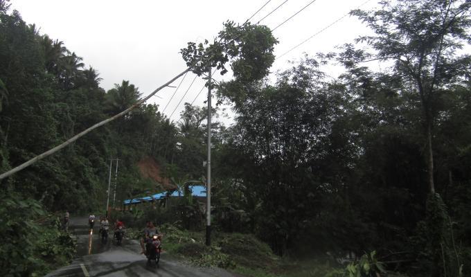 Pohon tumbang sering menimpa jaringan listrik yang berakibat pemadaman