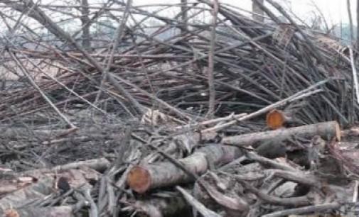 Hendak Buang Cabang Pohon Kering, Warga Kaget Dimintai Rp200 ribu