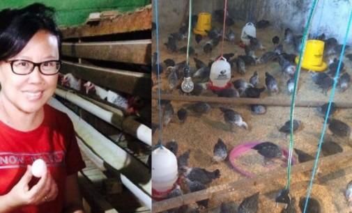 Kelompok Tani Wanita di Kawiley Sukses Produksi Telur Ayam Kampung