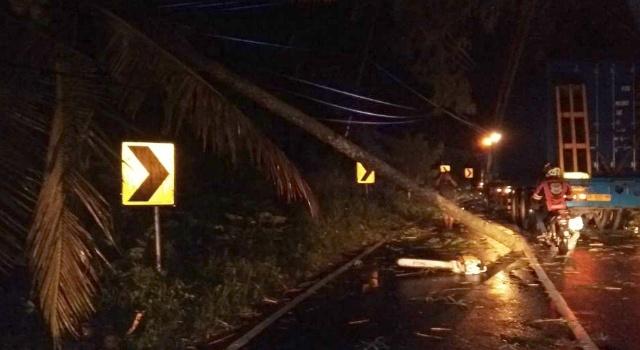Pohon tumbang di jalan bypass Minut.