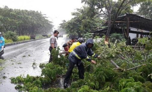 Cuaca Buruk, Waspadai Pohon Tumbang di Jalan SBY