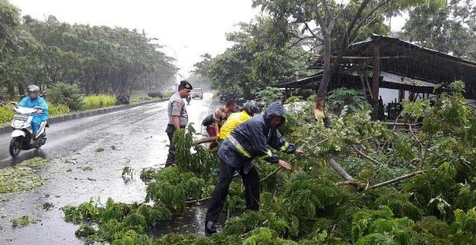 Pohon tumbang di Jalan SBY.