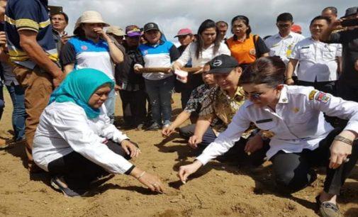 Bupati TETTY PARUNTU Lakukan Pencanangan Penanaman Bawang Putih di Kecamatan Modoinding