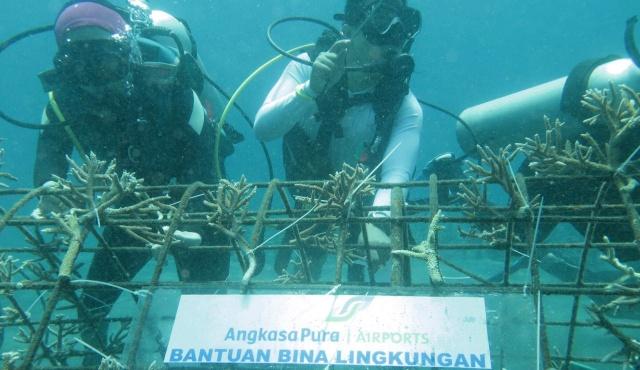 Penanaman coral di bawah laut Boboca
