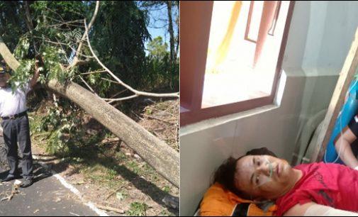 Firdaus Jadi Korban Pohon Tumbang