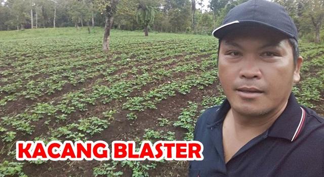 Heppy Walangitan saat berada di kebun yang ditanami kacang blaster