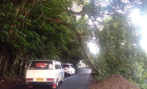 Waspada Tanah Longsor dan Pohon Tumbang, Billy Lombok Ingatkan Ini kepada BPBD
