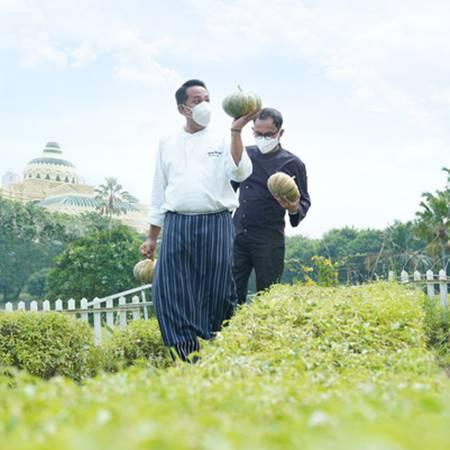 Chef Twedi Martatna dan Chef Hijrah Mustofa, memanen tanaman dari hasil Kebun Gizi, The Westin Surabaya (foto ist)